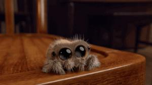 Lucas pavouk