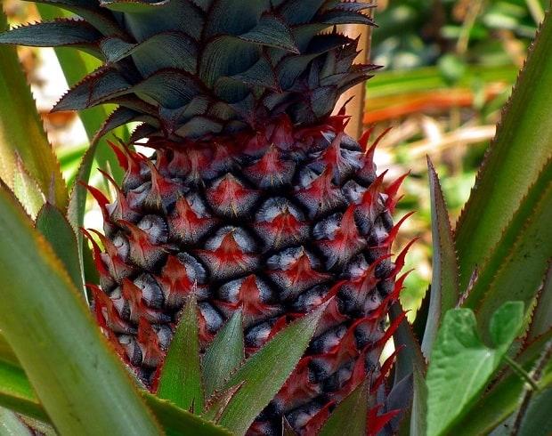 Tropické ovoce plné vitamínů.
