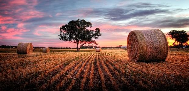 Půdy, které jsou vhodné pro pěstování, jsou zde velmi úrodné, avšak náchylné na přírodní živly.