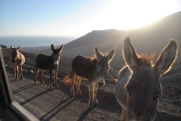 na cestách se potulují volně žijící zvířata