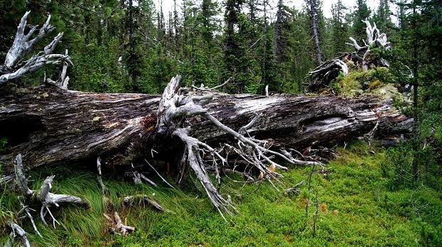 Čím to, že některé lesy v nás vyvolávají stísněné pocity?