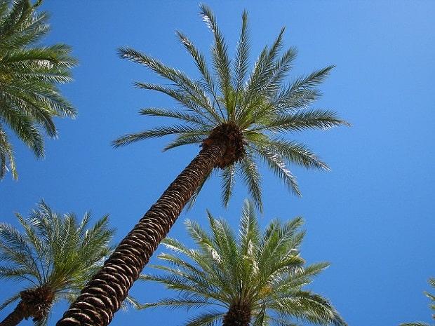 Palmy budete na Palmovce hledat bohužel marně.