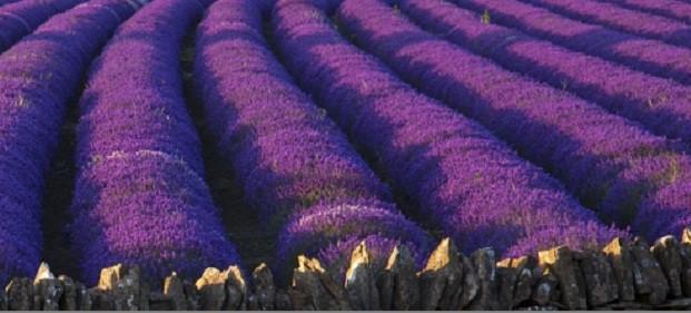 Fialová je spojením dvou kontrastních barev – jedné klidné, druhé divoké.