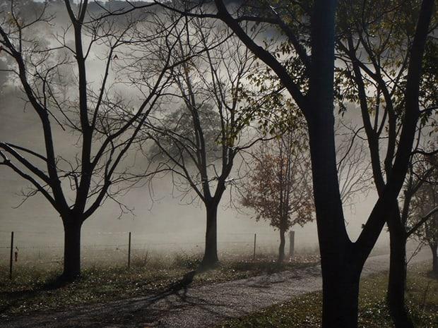 Přirozený řád přírody byl pro Erbena v jeho sbírce ústředním tématem.