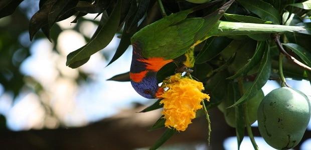 Tropické ovoce je tu neskutečně šťavnaté.