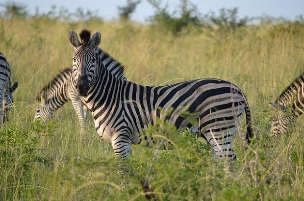 Takový výlet do safari by byl zážitkem na celý život.