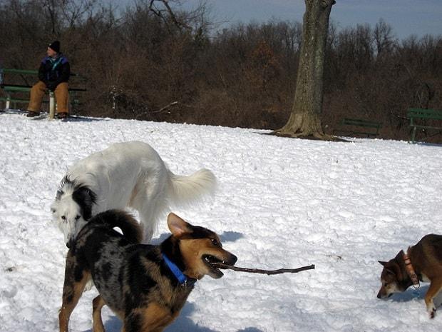 Procházky se psem jsou dobré nejen pro duši, ale i pro tělo.