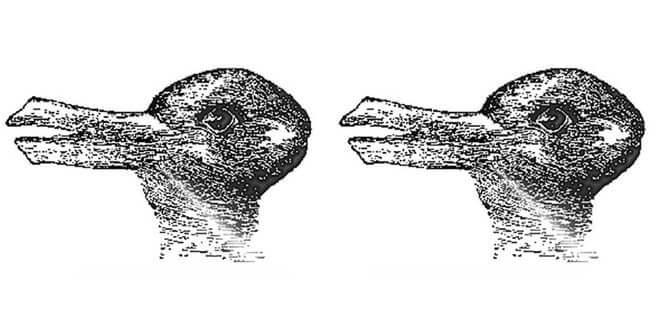 kachna nebo králík